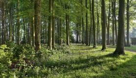 Biomass boilers help support the UK's woodlands
